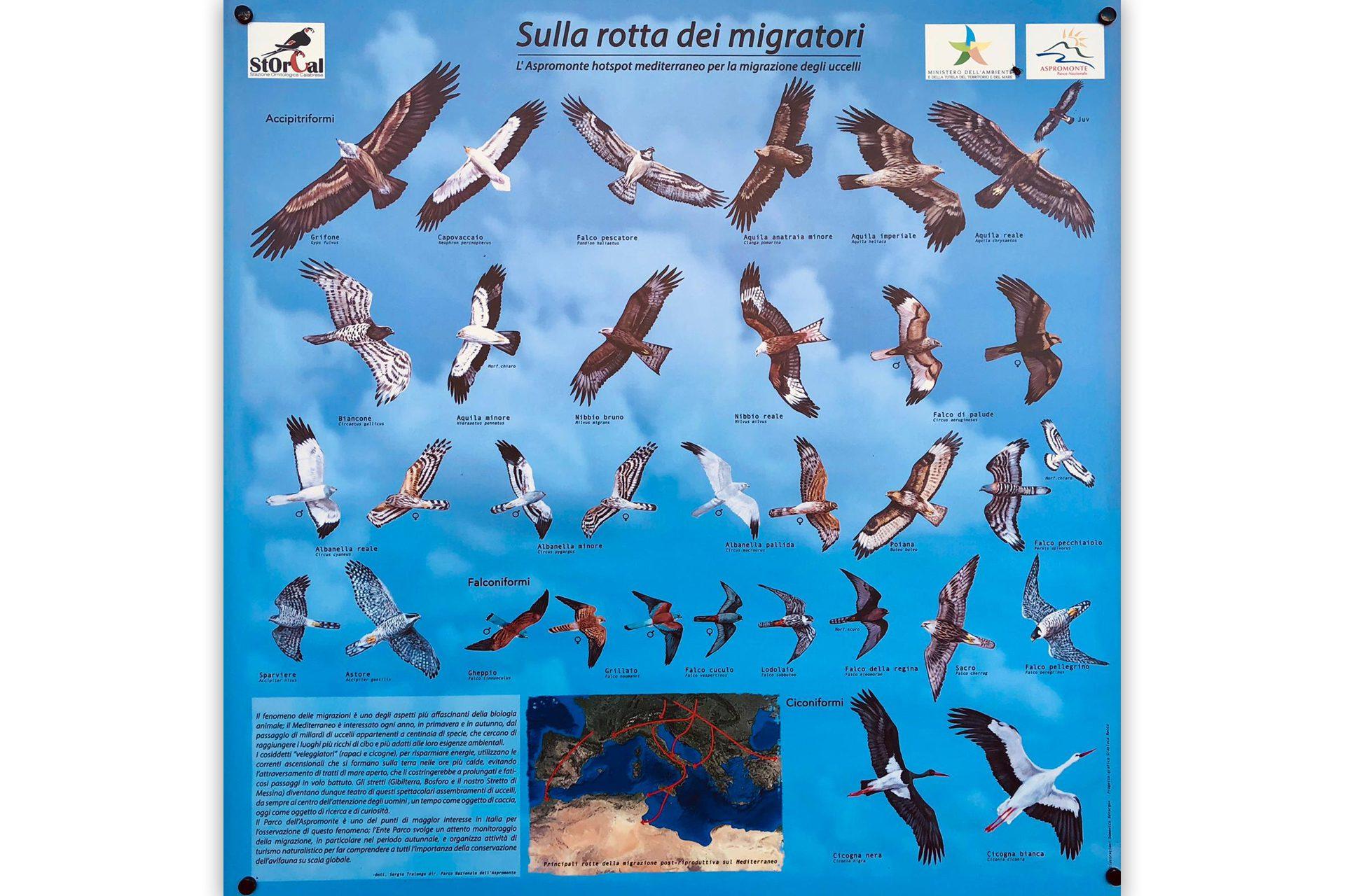 pannello_sulla rotta dei migratori_2_Storcal